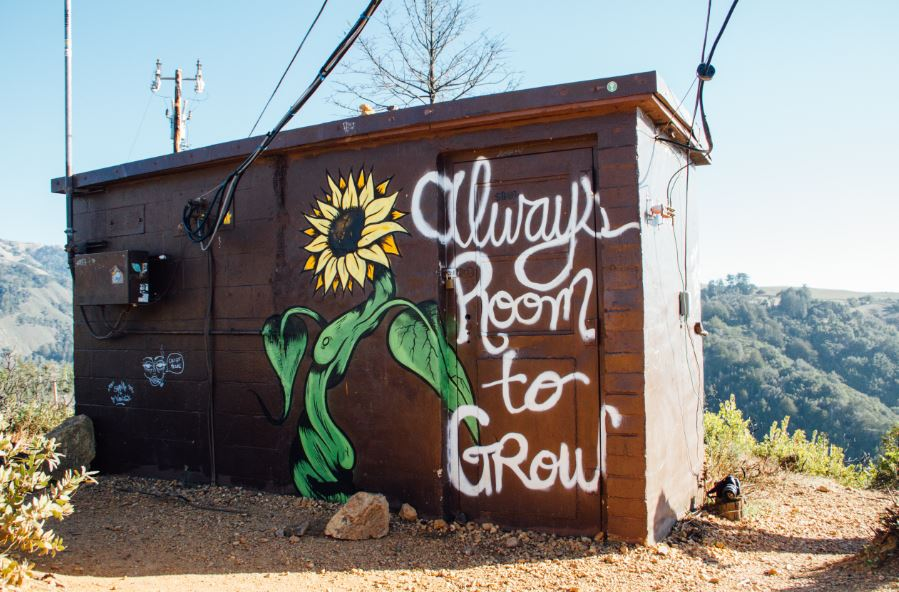 Painting of flower and words always room to grow depicting Diag Partners Growing